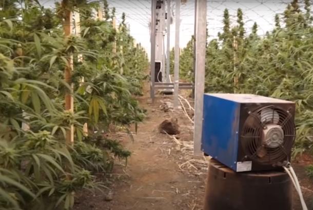Slučaj Jovanjica: Od dozvola države za uzgoj industrijske konoplje do najveće laboratorije marihuane u Evropi (VIDEO)