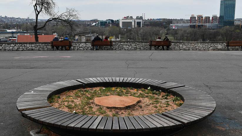 Posečeno drvo na Beogradskoj tvrđavi zbog izgradnje gondole / Foto: Srđan Ilić